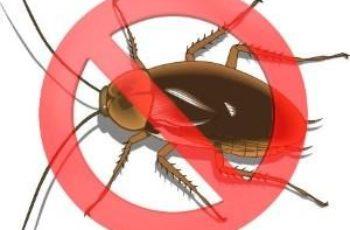 Pisar a una cucaracha para exterminarla