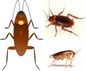Cucarachas - Veneno para cucarachas