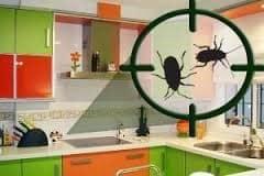 Como prevenir cucarachas
