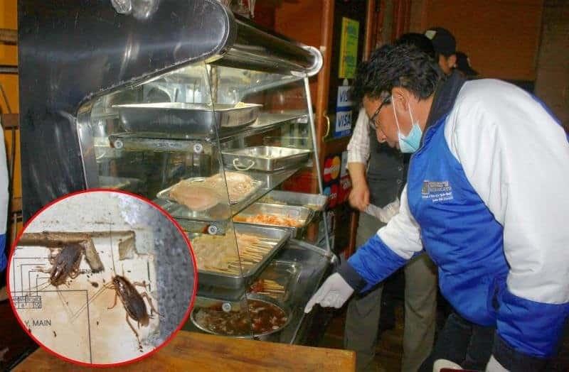 Las cucarachas producen enfermedades