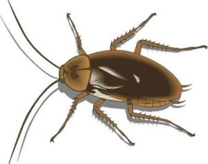eliminar una cucaracha