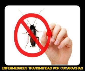 enfermedades transmitidas por cucarachas pdf - Veneno para Cucarachas