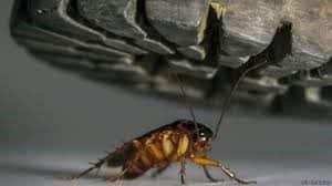 Mata las cucarachas