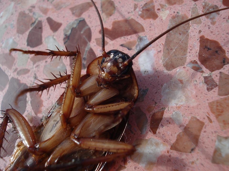 No permitas que las cucarachas conquisten tu hogar